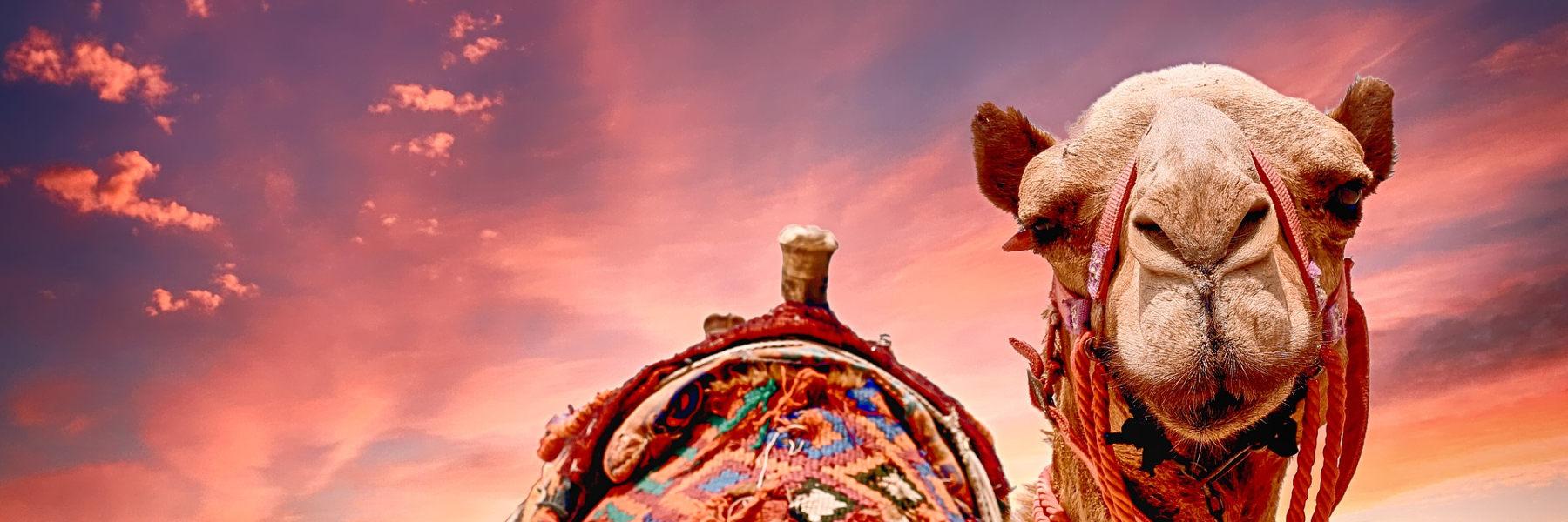 ▷▷▷ Restplätze Stornoreisen Balearen